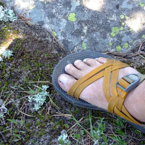foot in mountain meadow